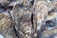 芦野の牡蠣